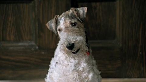 ТЕСТ: Вспомните, из какого фильма собака!